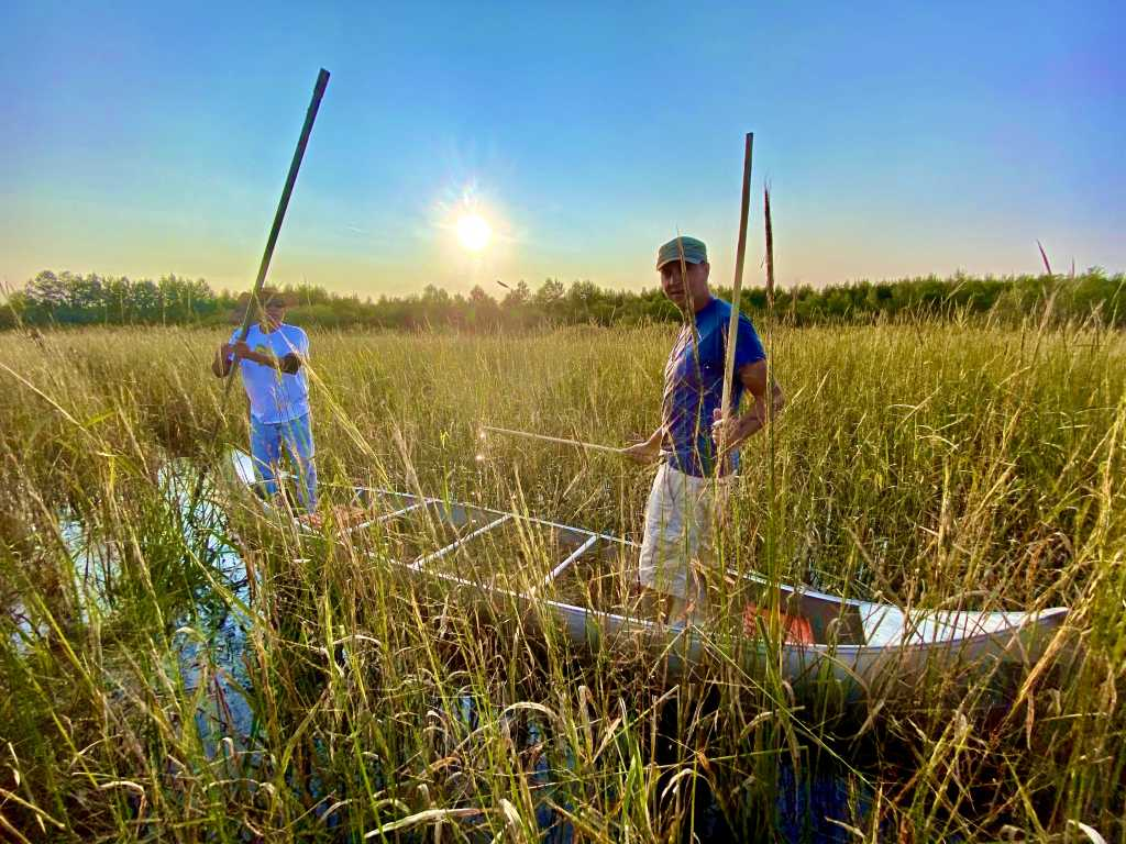 Wild Rice in the USA
